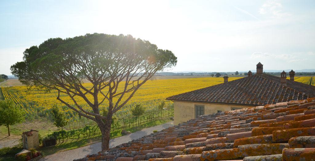 Bijzondere accommodaties Le Terre dei Cavalieri Appartementen in Cortona (Toscane, Italië)